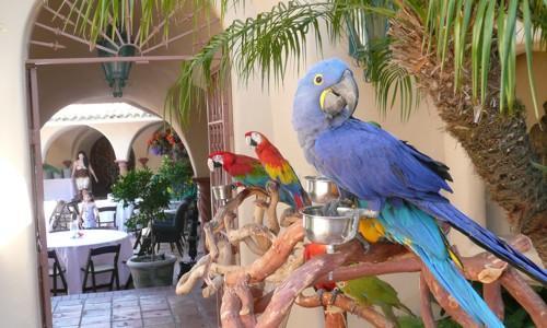parrot_party_2[1]